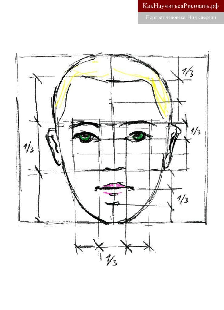 Построение портрета человека в фас