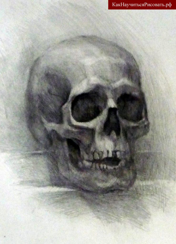 Рисунок черепа человека