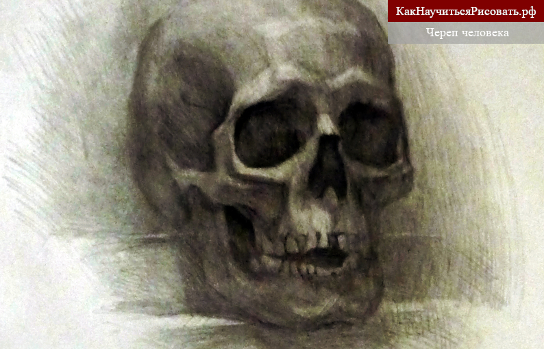 Череп человека. Рисунок карандашом