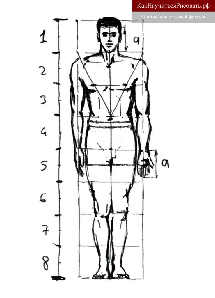 Построение мужской фигуры