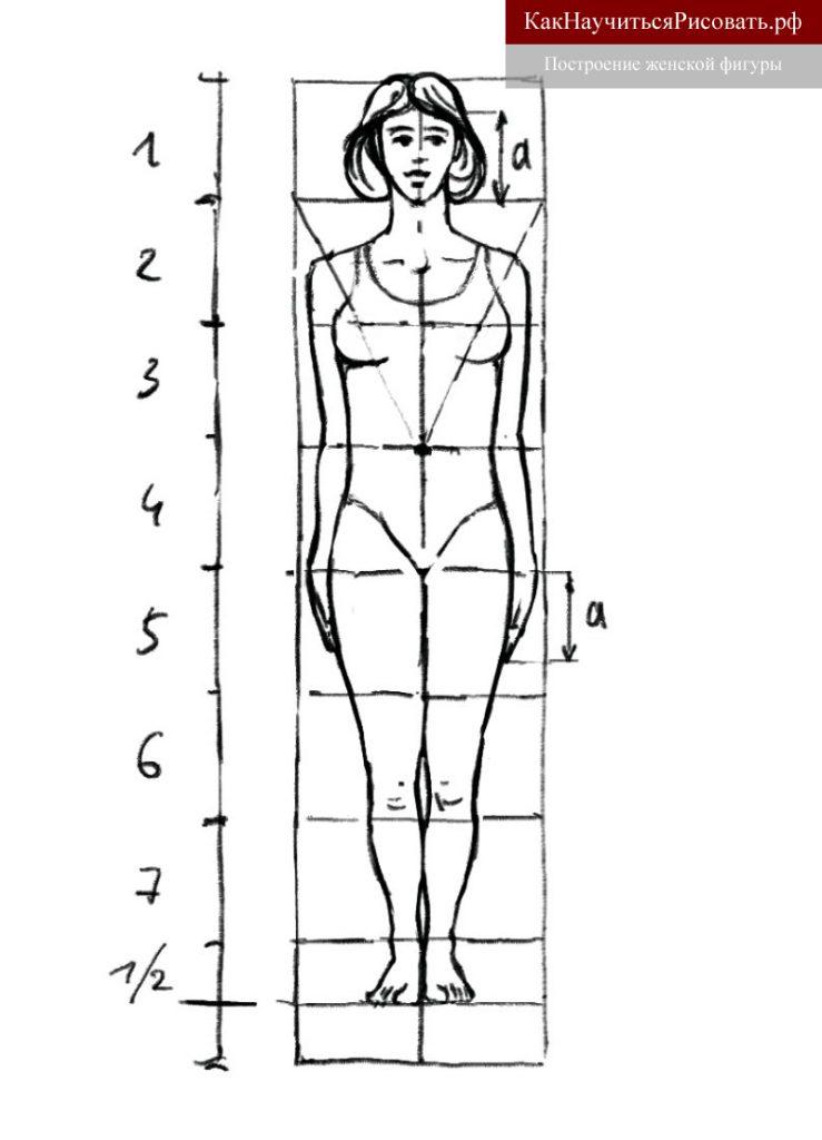 Построение женской фигуры